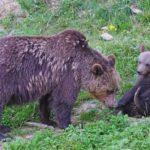 bear-1530790_1920